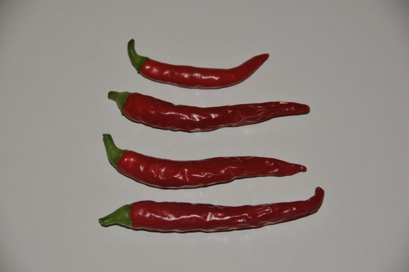 Chili Hot Joker  (Capsicum annuum)