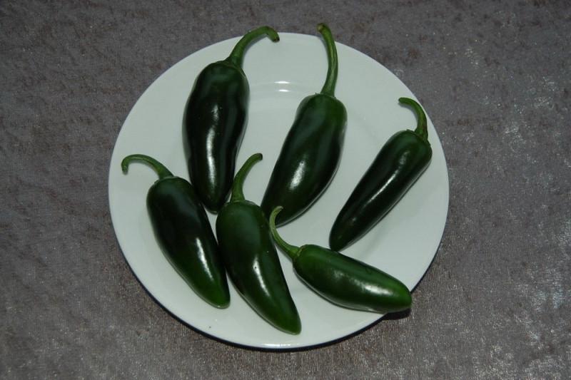 Chili Jalapenos (Capsicum annuum)