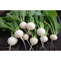 Majroe  Snowball (Brassica rapa)