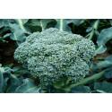 Broccoli calabrese, Green Sprouting (Brassica oleracea var. Italica)