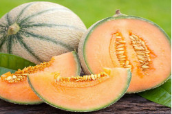 Melon Canta Charenatais (Cucumis melo Var. Cantalupensis)