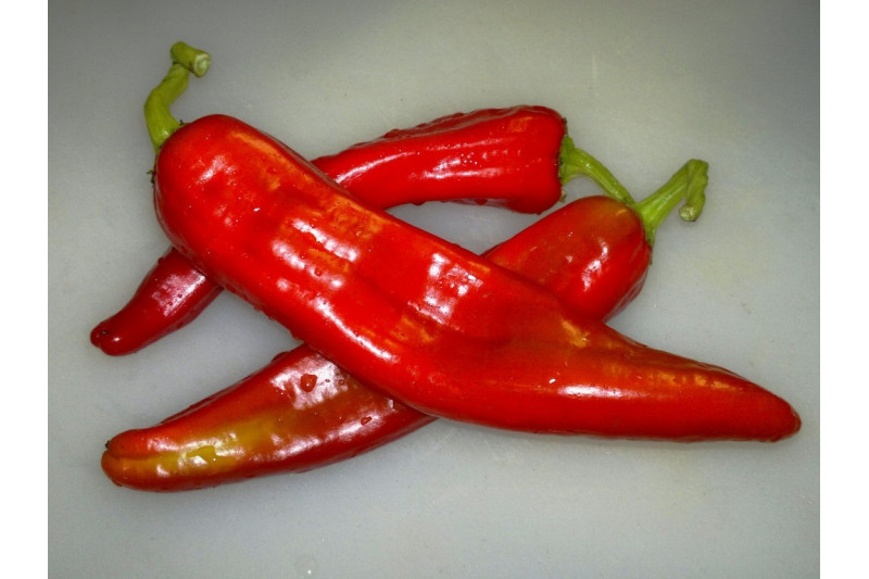 Chili Big Jim (Capsicum annuum)