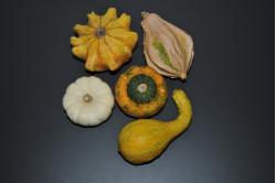 Pyntegræskar (Cucurbita pepo)