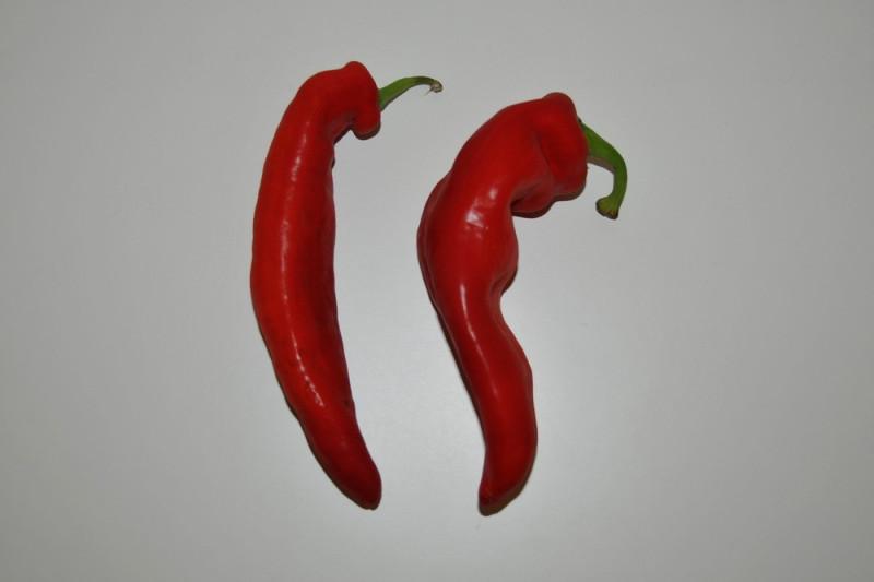 Palermo Peber Rød (Capsicum annuum)