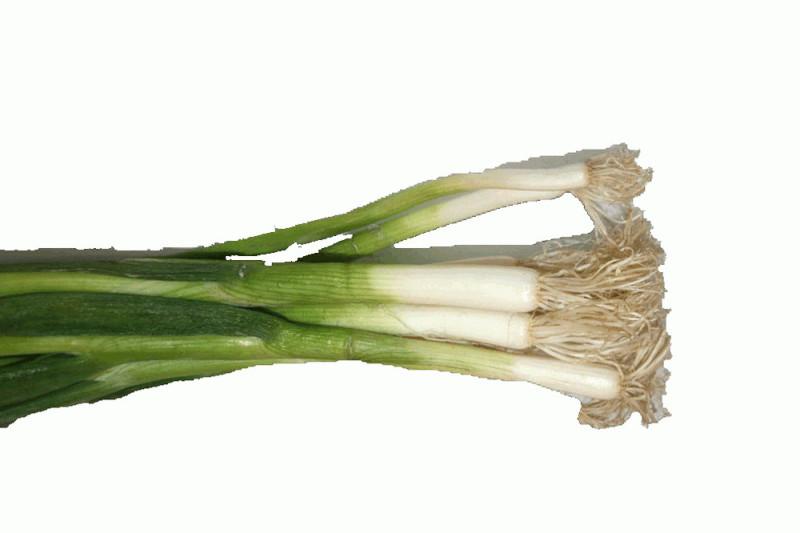 Forårsløg Savel (Allium fistulosum)
