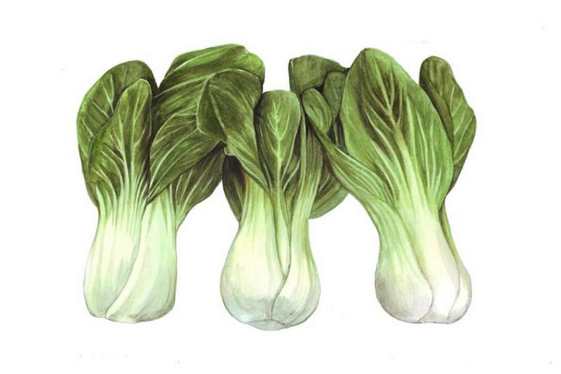 Pak Choi F1 Yuushou (Brassica rapa var chinensis)