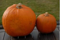 Halloween græskar...