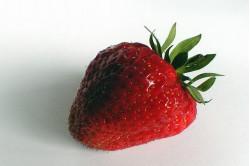 Jordbær Temptation...