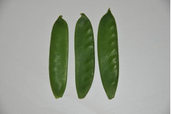 Sukkerært Ambrosia (Pisum sativum)