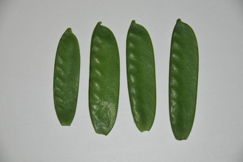 Sukkerært Oregon Suger Pod (Pisum sativum)