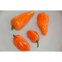 Chili Habanero Orange (Capsicum annuum)