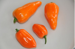 Chili Habanero Orange (Capsicum annuum)