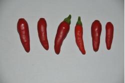 Chili Tabasco (Capsicum frutescens)