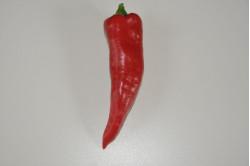 Peber Corno de Toro - rød (capsicum annuum)