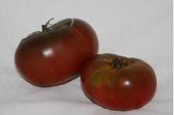 Cherrytomat Black Cherry (Solanum lycopersicum)