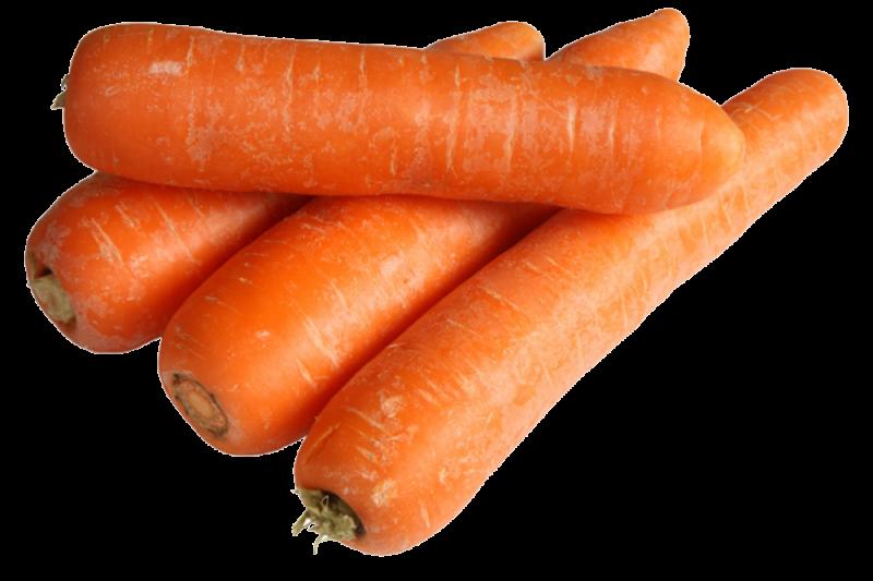 Gulerod Karotela (Daucus carota)