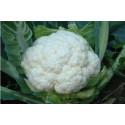Blomkål All The Year Round (Brassica oleracea var. botrytis)