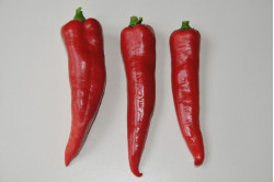 Peber mild rød
