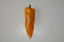 Peber mild gul