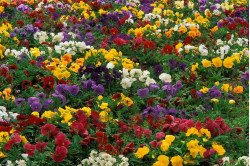 Blomsterblanding