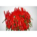 Chili Birds Eye (Capsicum Frutescens)