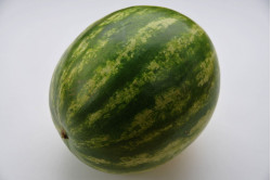Vandmelon Sugar Baby (Citrullus lanatus)
