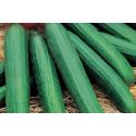 Agurk Louisa F1 (Cucumber)